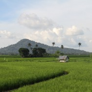 Rice fields, Sulawesi