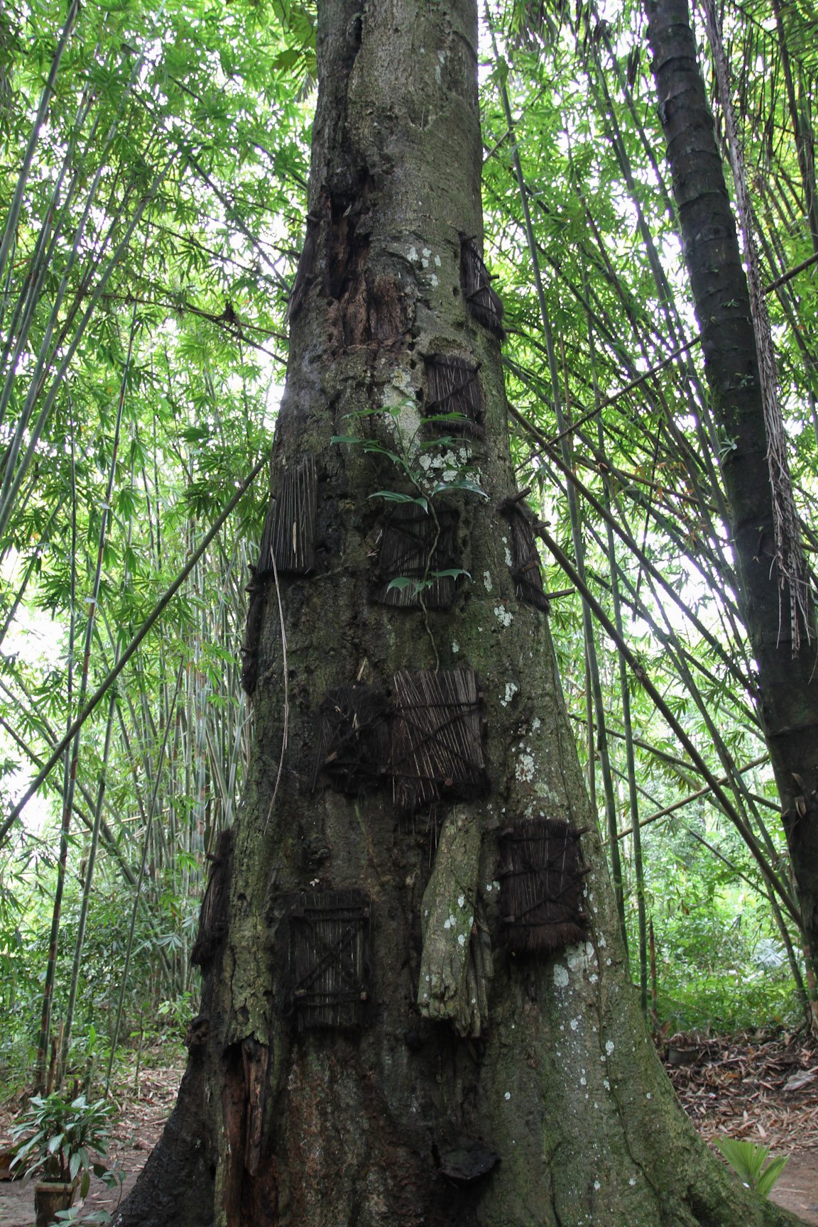 The tarra tree, containing the bodies of babies that have passed away
